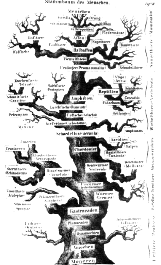 Glottolog - Old world language families map